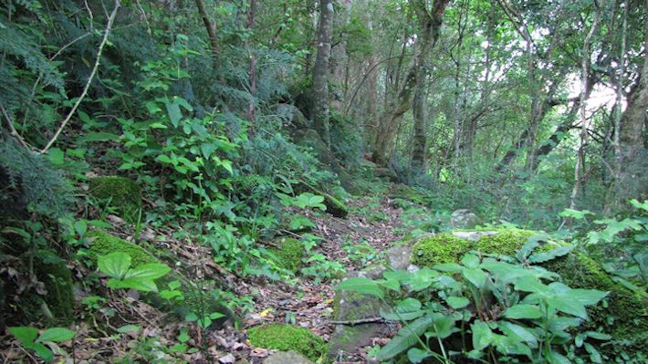 Forest path - Old Kilgobbin Farm, Dargle